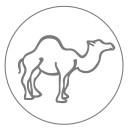 Wełna wielbłąda